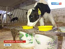 От чего отказался теленок: в России расплодились молочные подделки