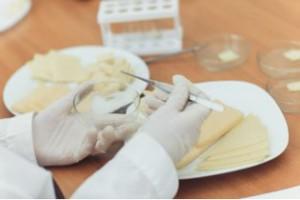 Сыр с растительным жиром на новгородских прилавках