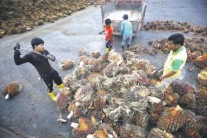 Сыры превращаются в России в пластилиновый муляж еды