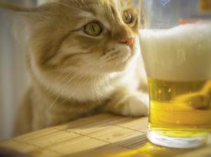 Эксперты Роскачества рассказали, как отличить настоящее пиво от подделки